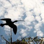 Curlew Weather Vane