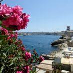 Bougainvillea over Siege Memorial, Valletta, Malta