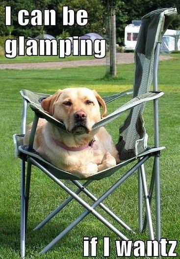 dog-glamping